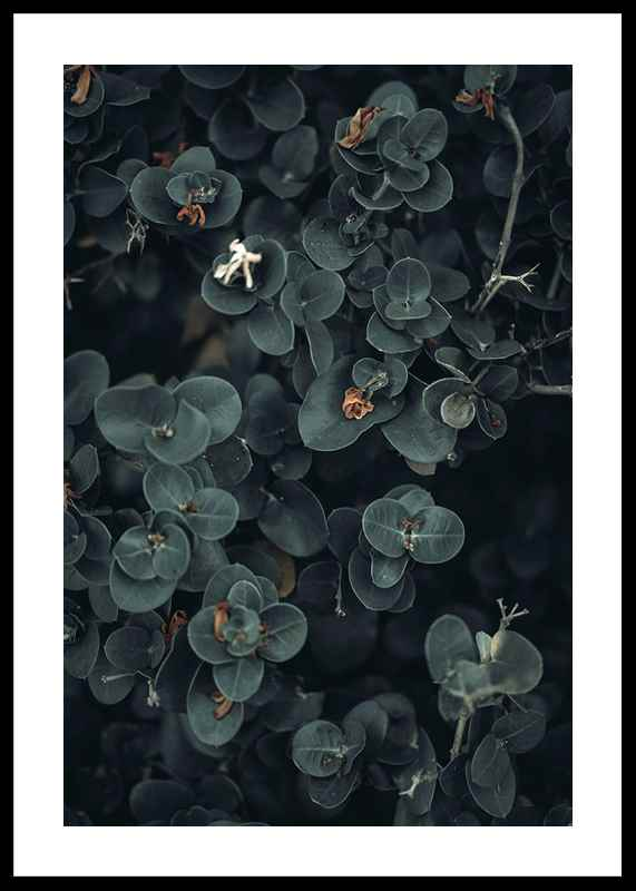 Dark And Green Botanical