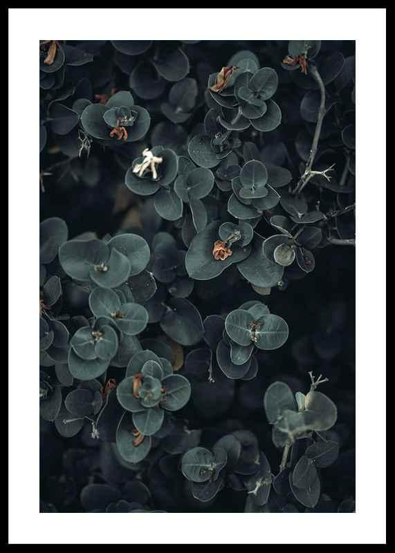 Dark And Green Botanical-0