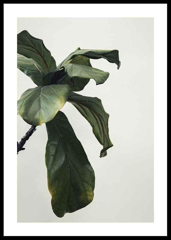 Botanical Leaves-0