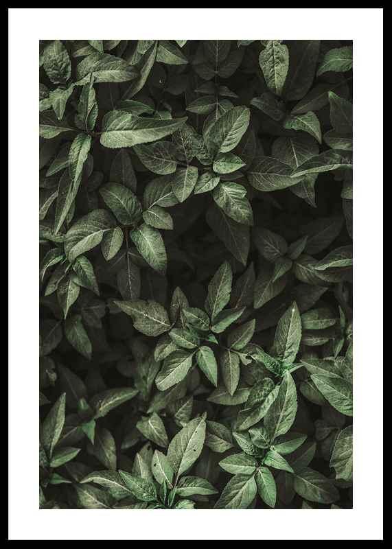 Garden Green No1
