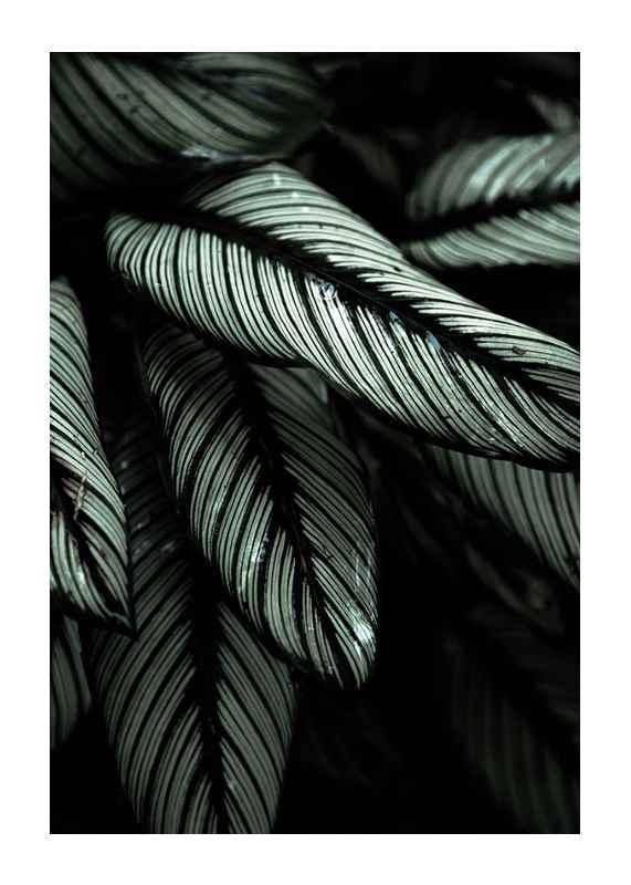 Dark Green No2-1