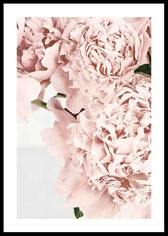Loving Roses No2-0