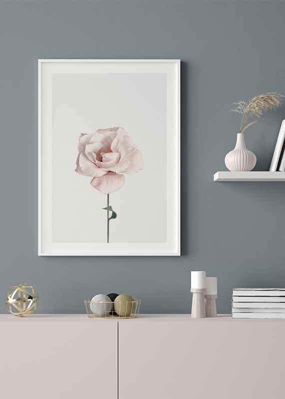 Pink Rose No1-4