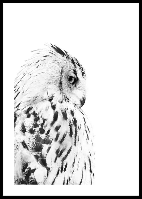 Snow Owl-0