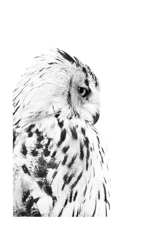 Snow Owl-1