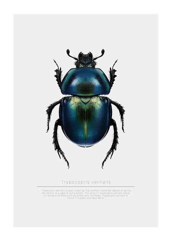 Beetle Display-1