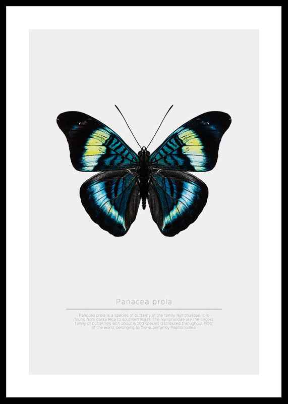Butterfly Display-0