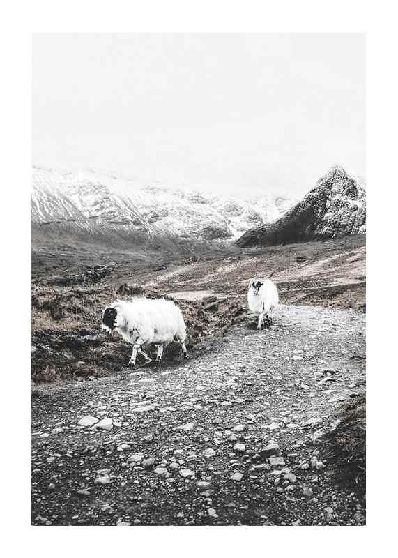 Winter Goats-1