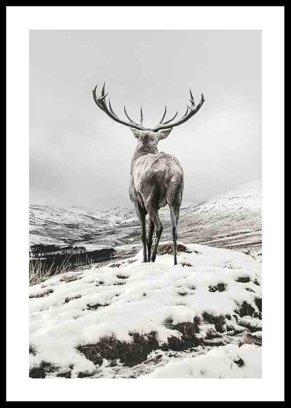 Winter Roe Deer-0