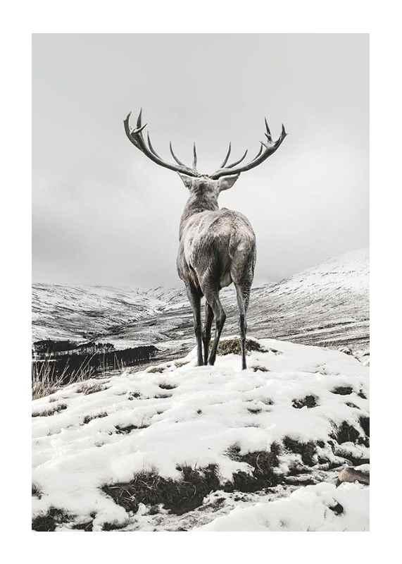 Winter Roe Deer-1