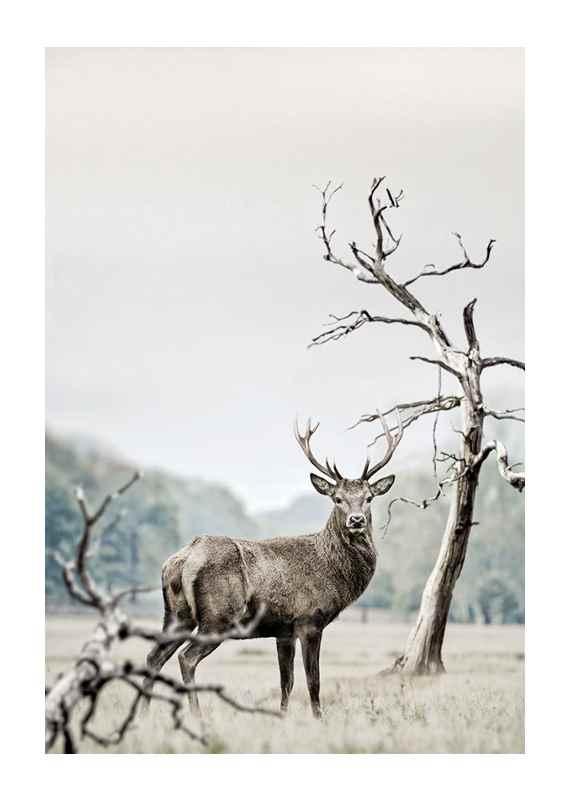 Winter Deer-1
