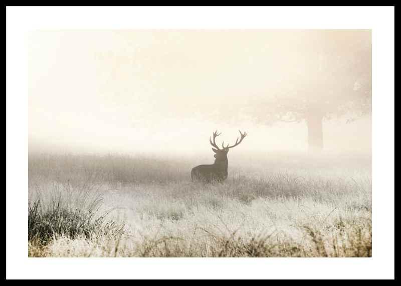 Deer In Mist