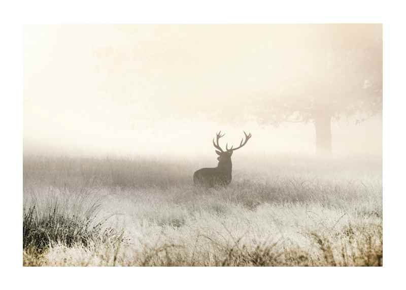 Deer In Mist-1