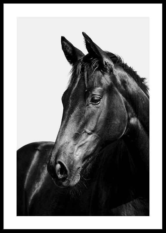 Black Horse-0