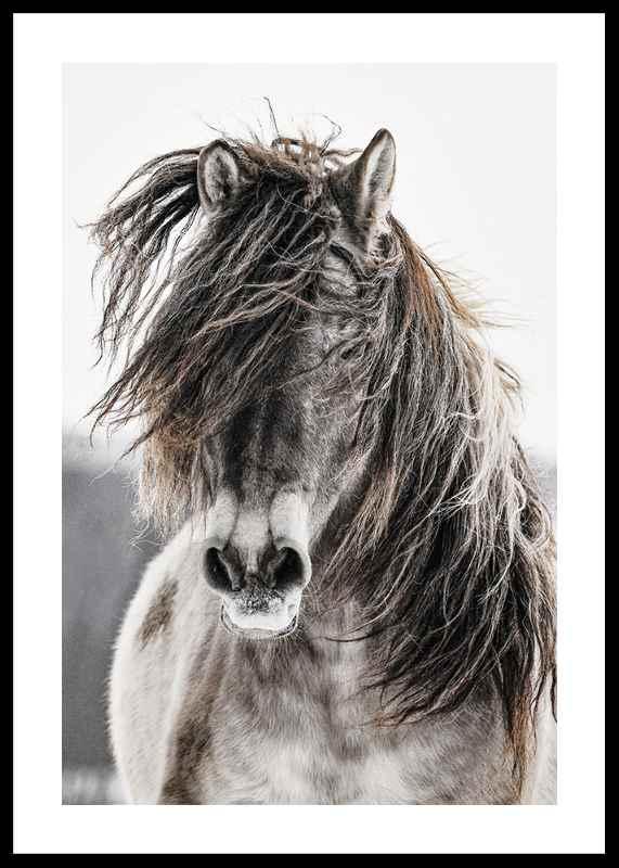Wild Horse-0