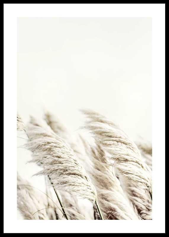 Reed In Wind