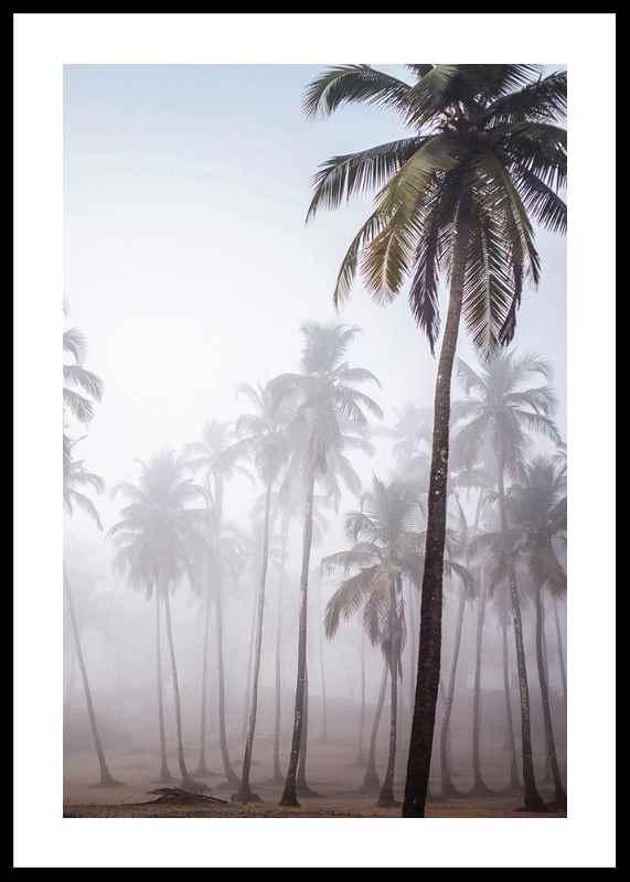 Palms In Haze-0