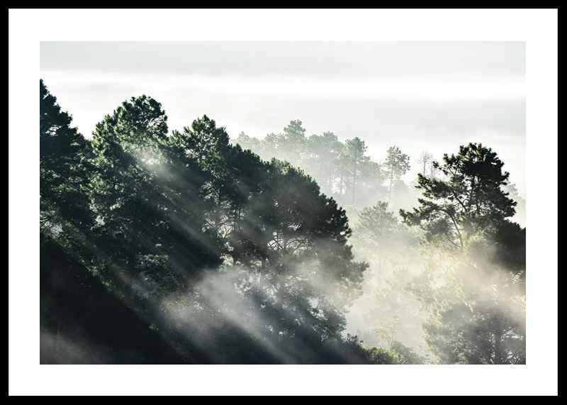 Sunlight Forest-0