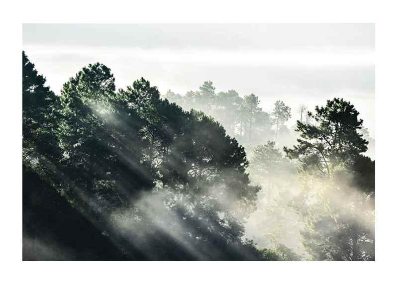 Sunlight Forest-1