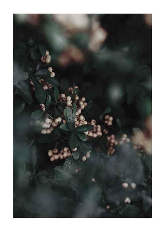 Forest Vegetation-1