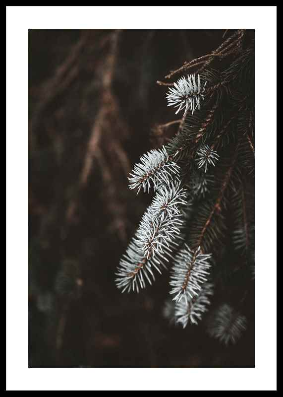 Fir Needle In White