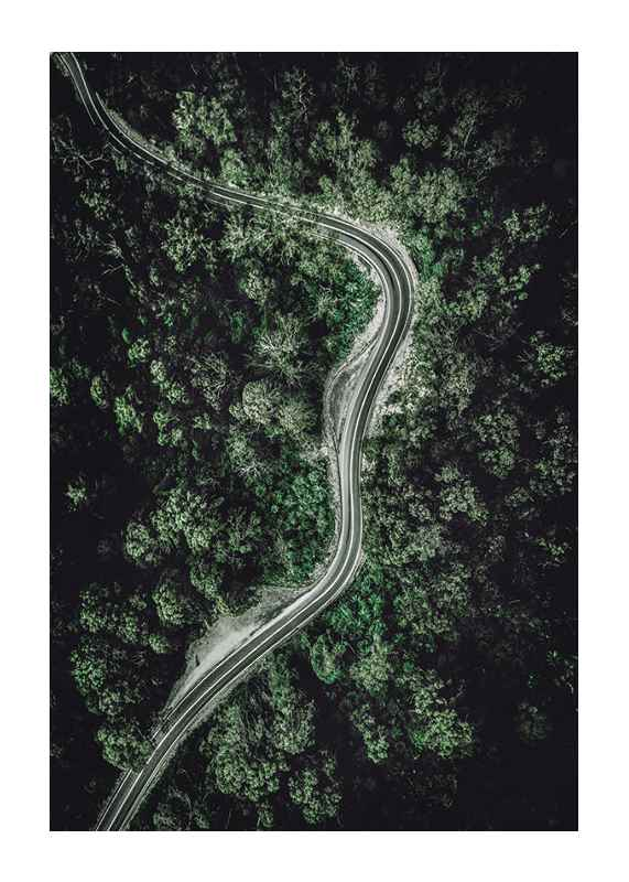 Forest Road-1