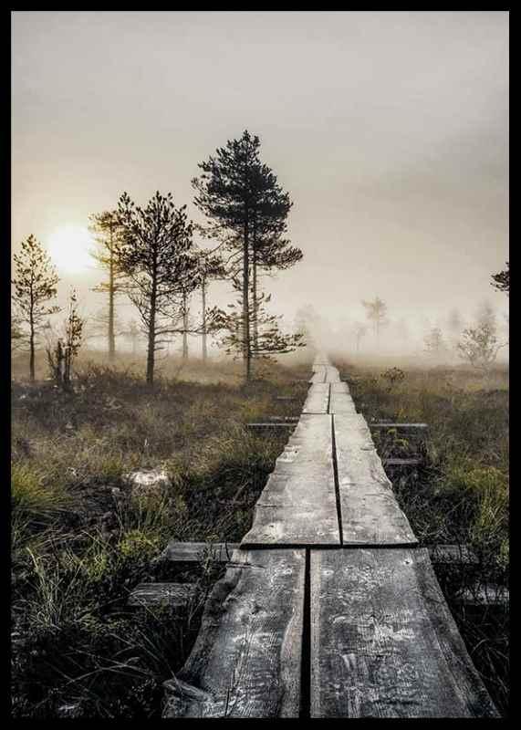 Torronsuo Wilderness-2