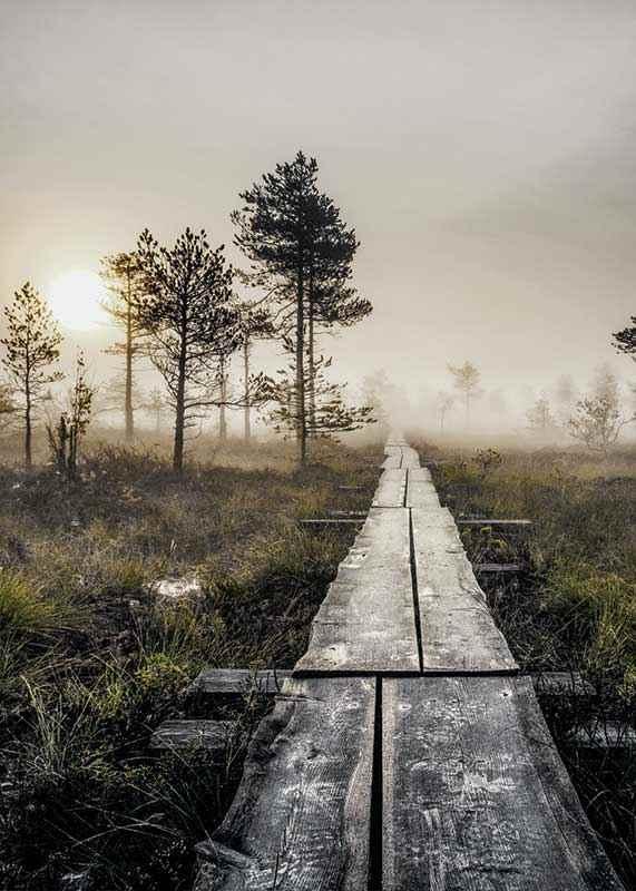 Torronsuo Wilderness-3