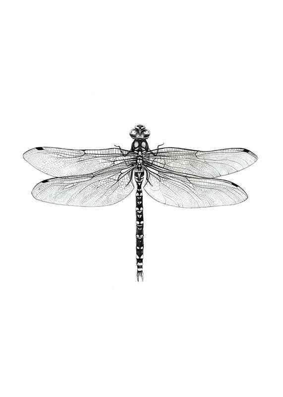 Dragonfly-1