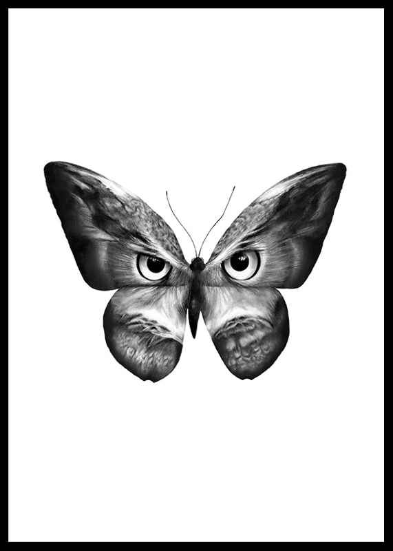 Owlifly