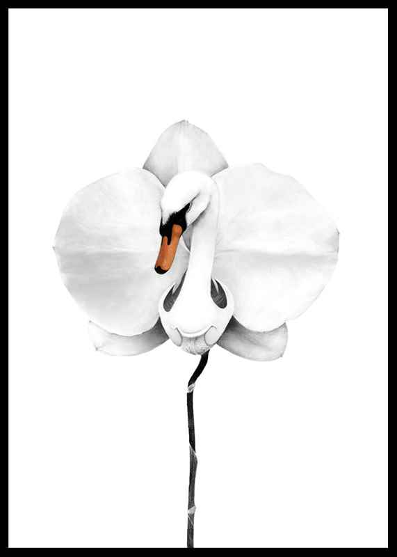Swan orchid-0