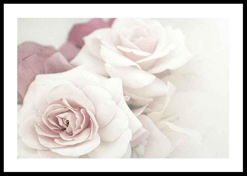 Perfect Pair Roses-0