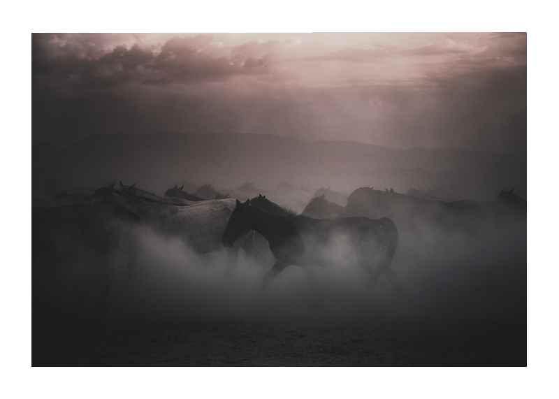 Sunset Horses-1