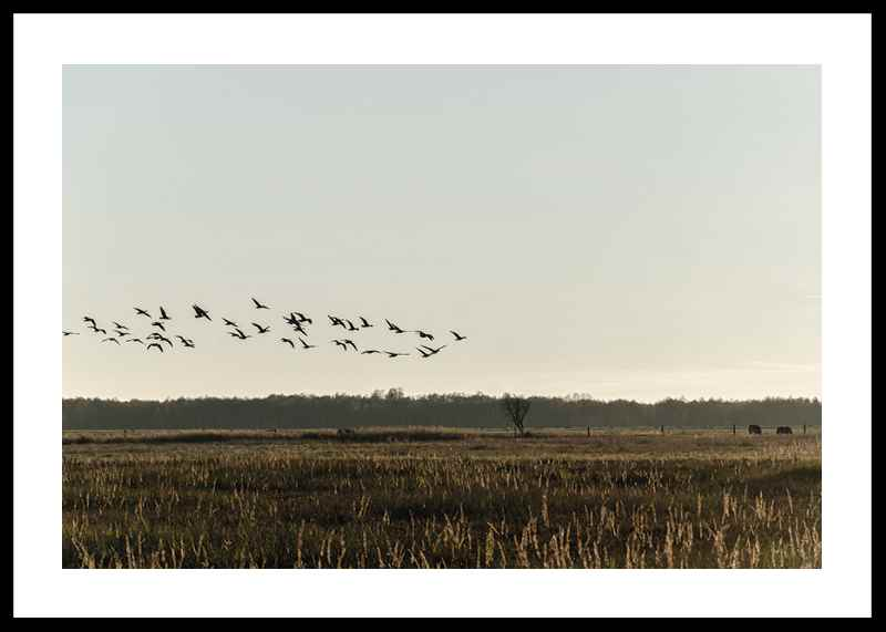 Birds Flyby