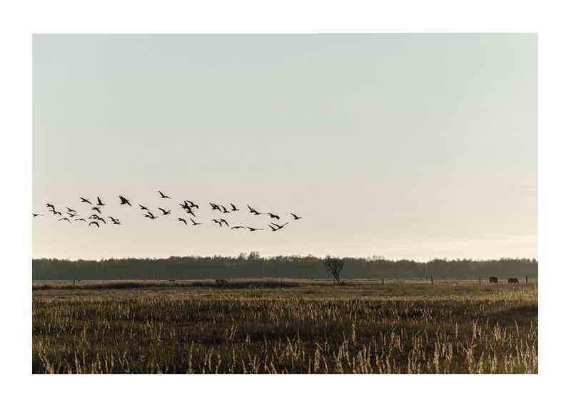 Birds Flyby-1