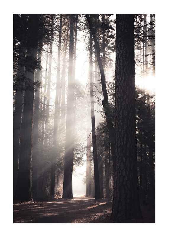 Yosemite Valley-1