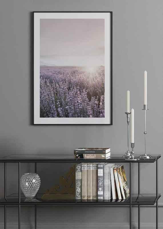 Provence Lavender-4