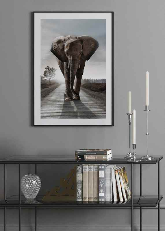 Elephant Road-4