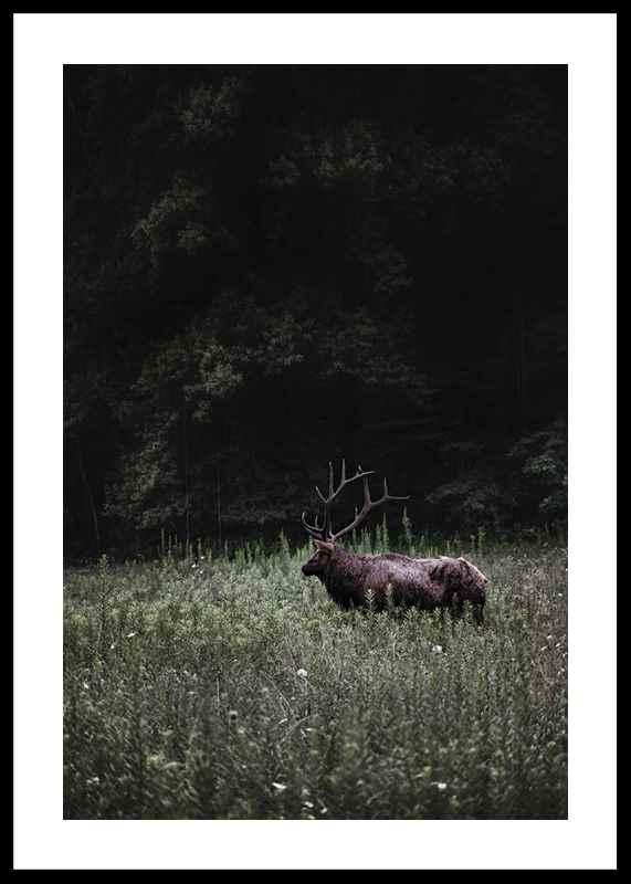 Deer in Nature-0