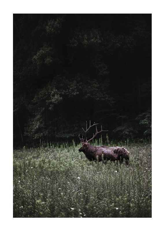 Deer in Nature-1