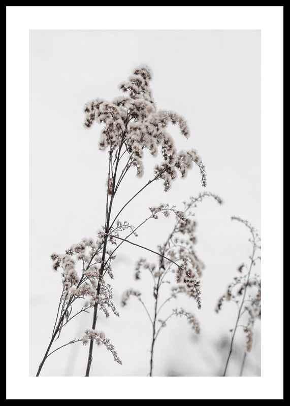 Dry Flowers-0