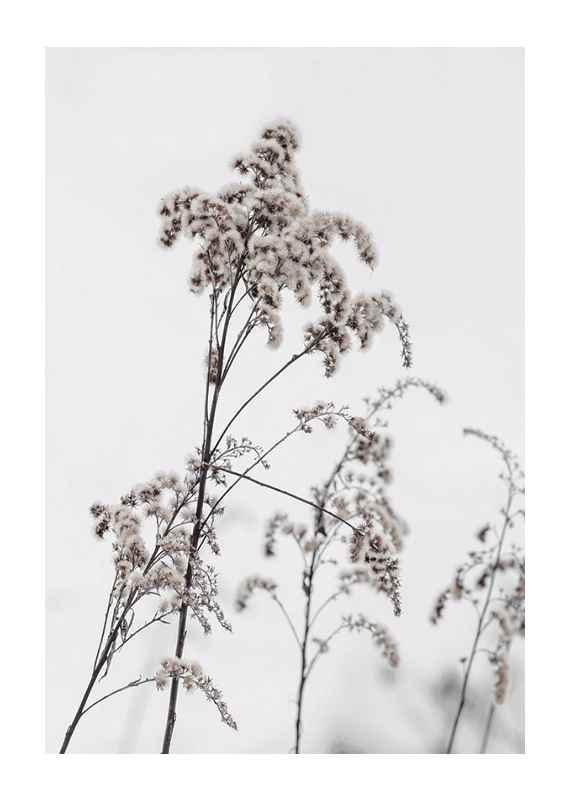 Dry Flowers-1