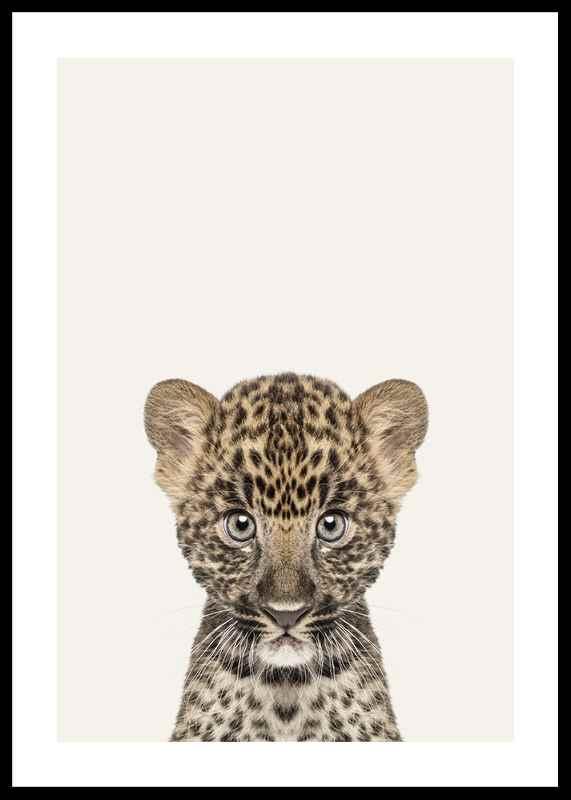 Baby Leopard-0