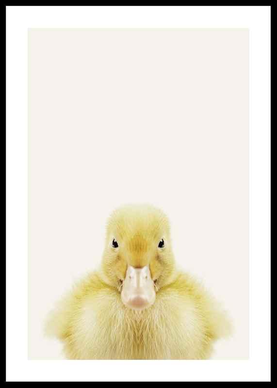 Baby Duck-0