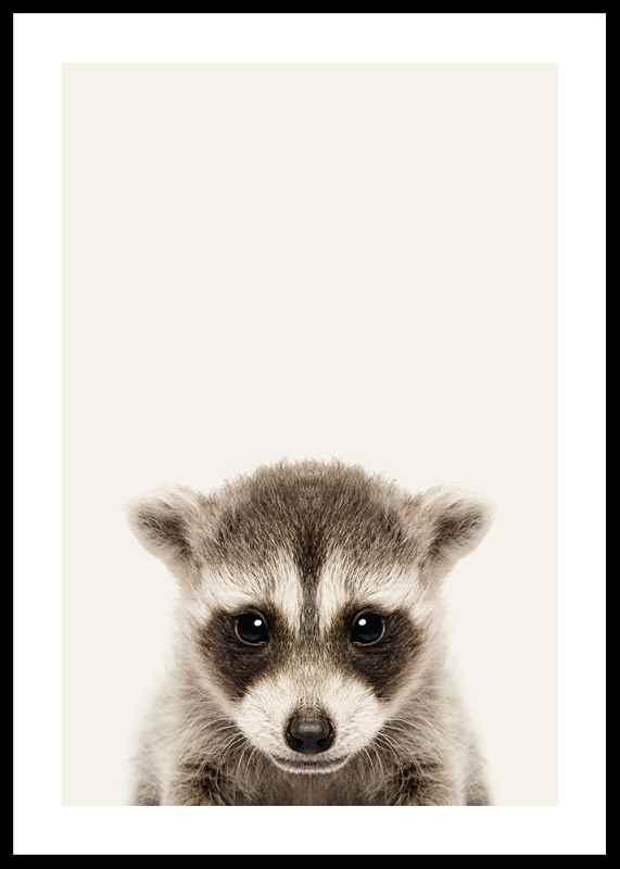 Baby Raccoon-0