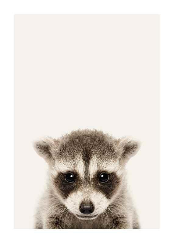Baby Raccoon-1