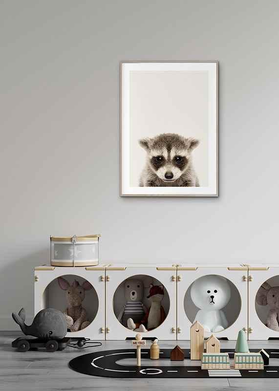 Baby Raccoon-4