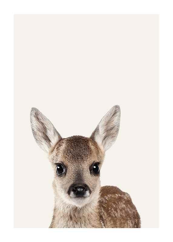 Baby Deer-1