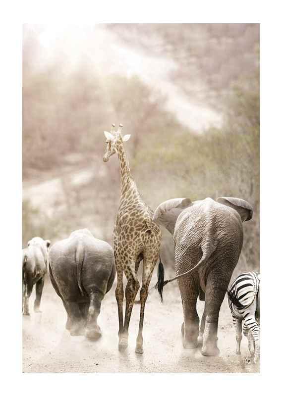 Wild African Animals-1