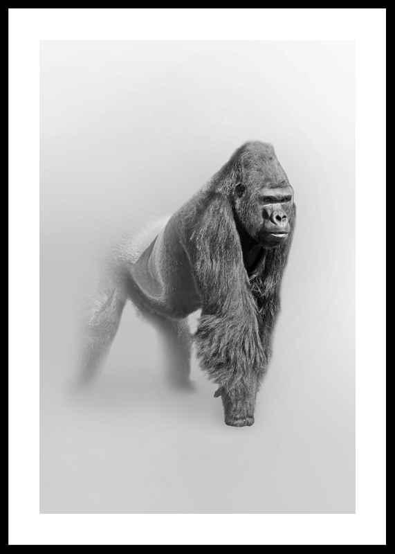 Faded Gorilla